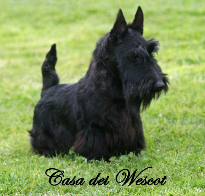 ORONERO CASA DEI WESCOT