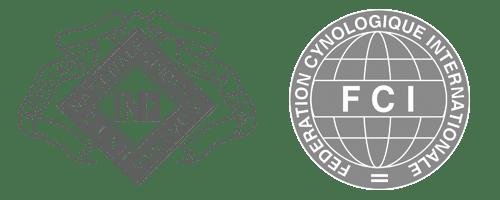 Allevamento riconosciuto ENCI / FCI