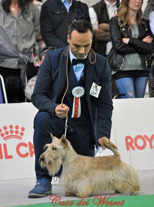 IDS Forlì 22 Aprile 2017