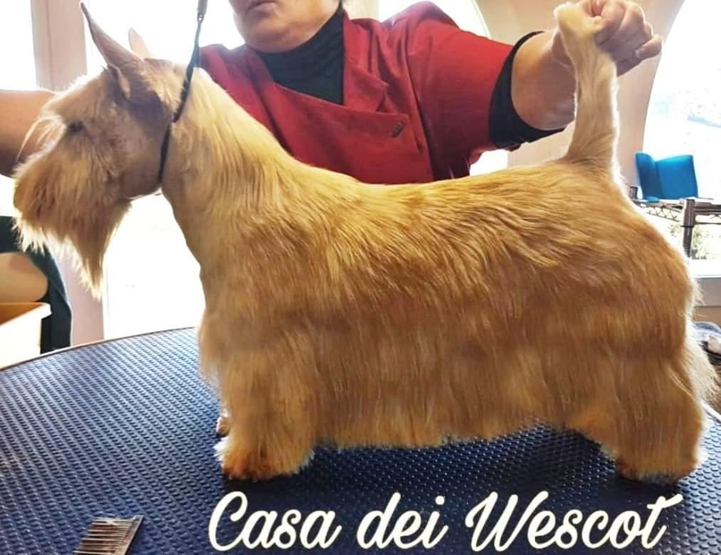 BRINA CASA DEI WESCOT